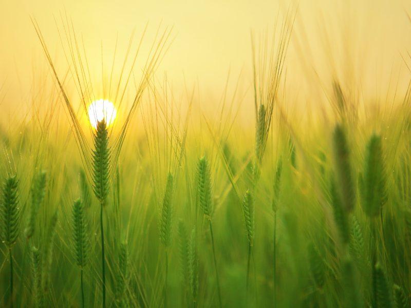 Loi EGAlim : de nouvelles avancées en faveur d'une agriculture et d'une alimentation plus durables