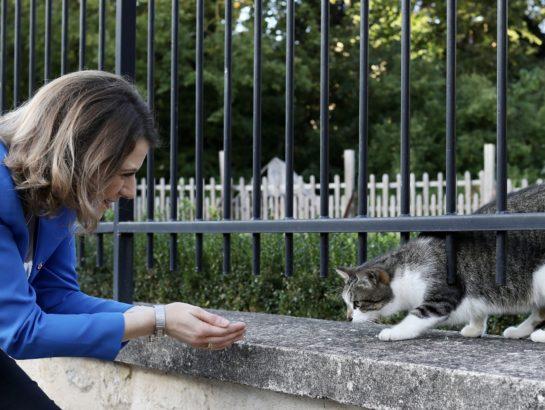 Lutte contre la maltraitance animale : je dépose une proposition de loi